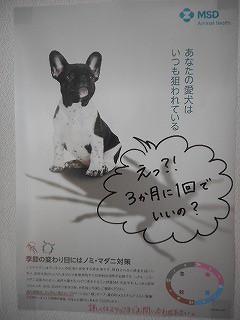 マダニ 駆除薬 犬