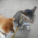 ネコの方が怖がっています…